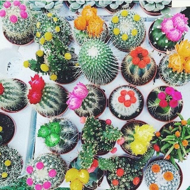 Plants that don't die One Agency Torquay gardening blog